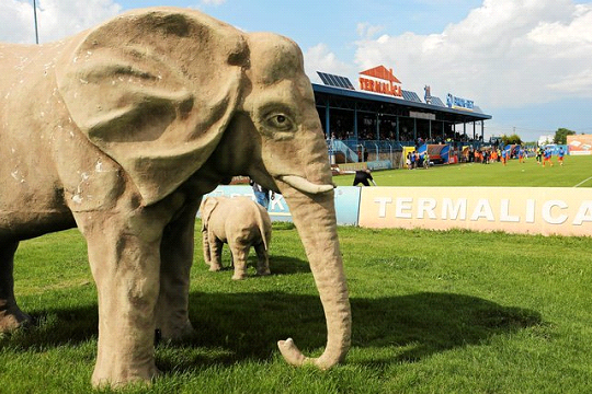 Oh le bel éléphant en Ekstraklasa ! | @ Mateusz Skwarczek - Agencja